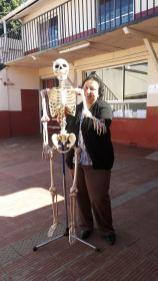 Para clases de ciencias: sistema óseo