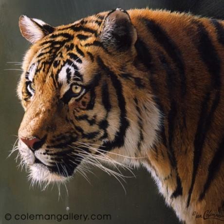Coleman Gallery Herefordshire Amp Wildlife Artist