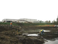Remediation of wetlands