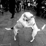 dogs fighting by Roberto Trm