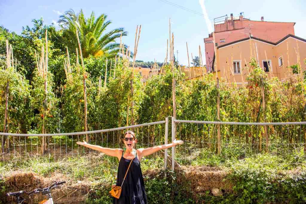 Tomato Garden in Manarola, Cinque Terre, Italy