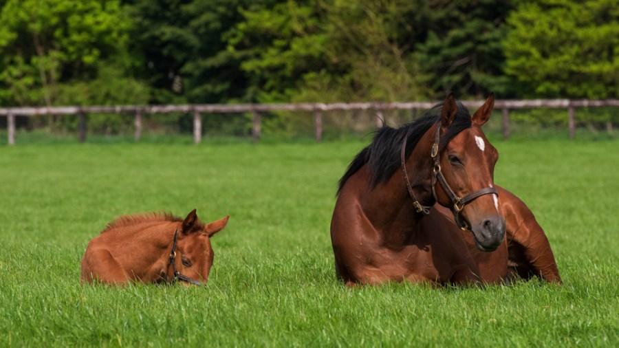 Inca Princess and her foal
