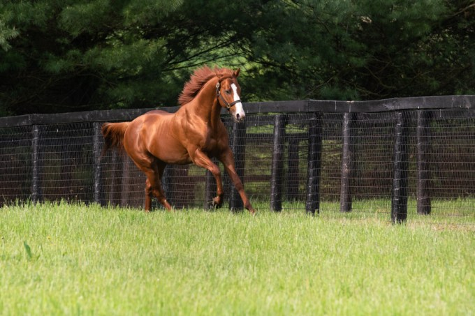 Justify galloping in paddock at Coolmore America