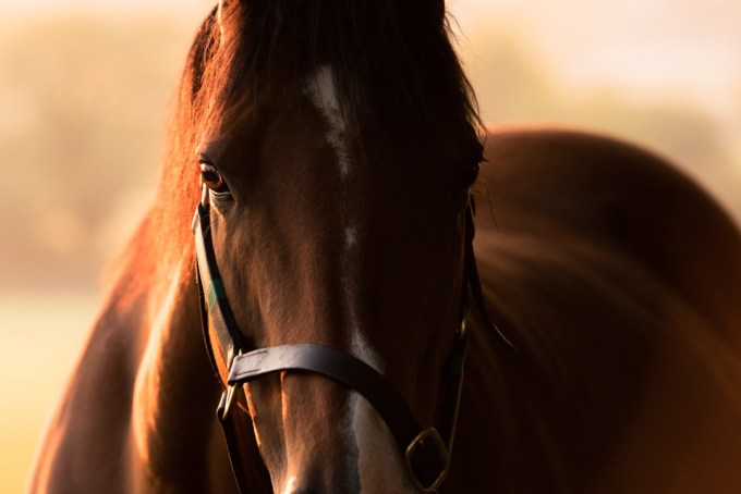 Mare with backlight