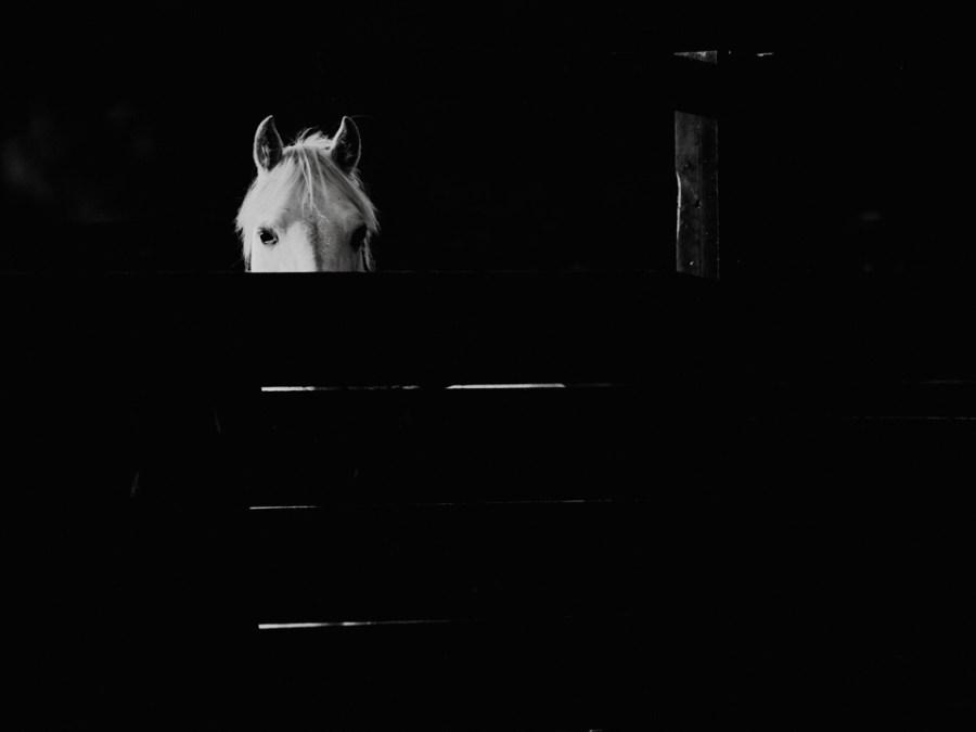 The teaser pony