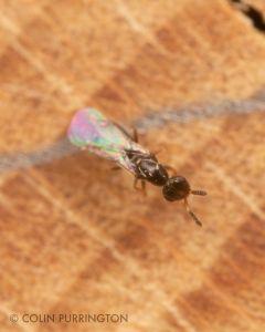 Small wasp at mason bee house