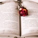 Por una rosa: tres autores, tres cuentos. Reseña.