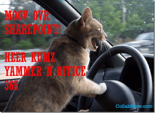 Cat Driving Yammer and Office365
