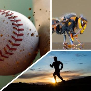 Il baseball, la corsa e i coriacei bombi