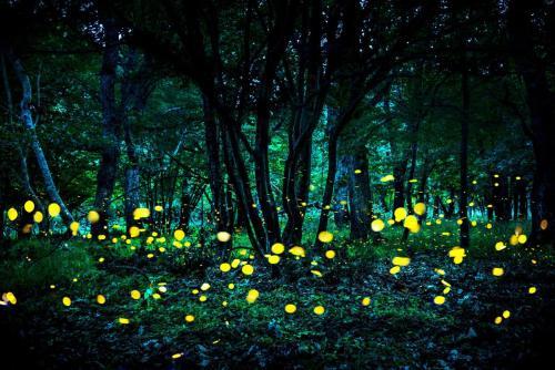 Fireflies dance in the backyard