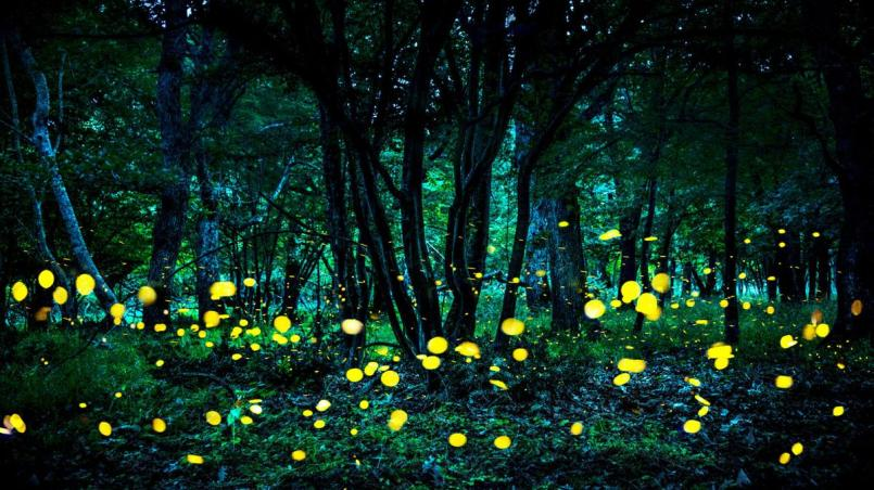 Fireflies dance in the backyard