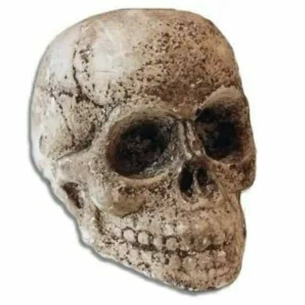 Resin Decayed Skull