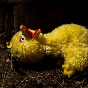 When Bob woke after death…