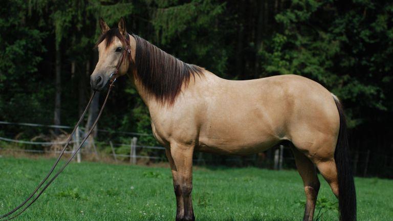 Mettre en valeur son cheval
