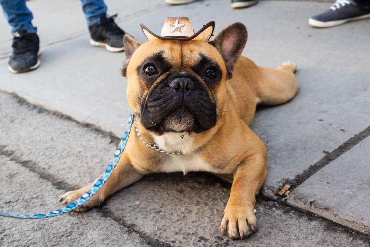 dog in a cowboy hat