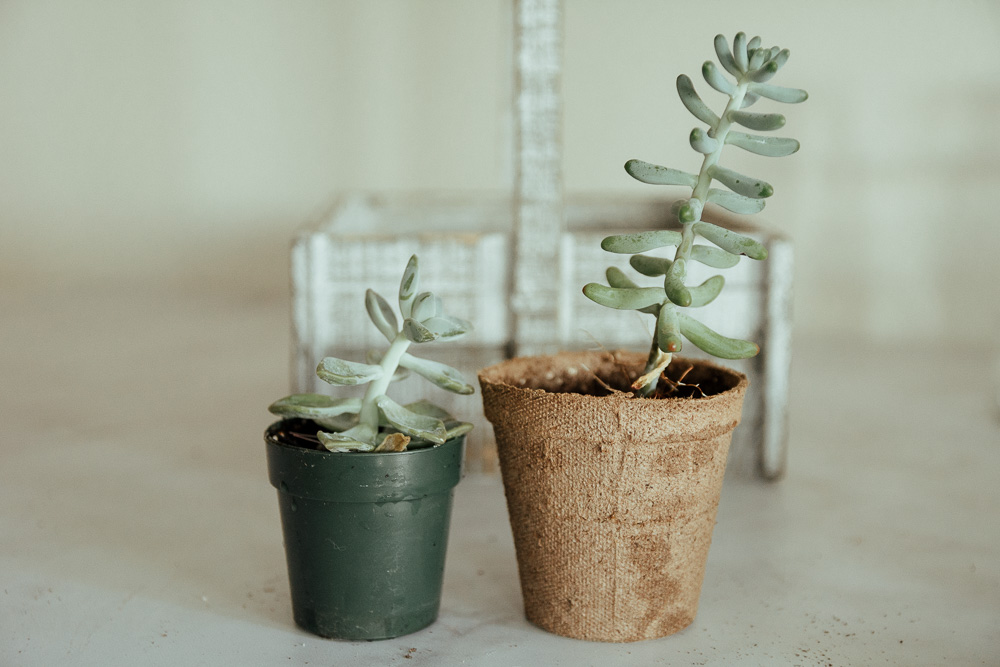 how to procreate succulents