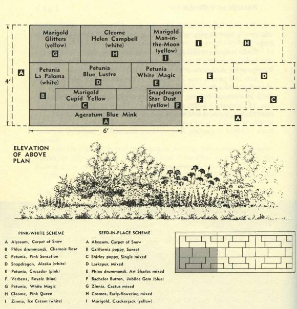 cycle 3 task 11, Erica Baum, Elevation of Above Plan Garden for Madeline