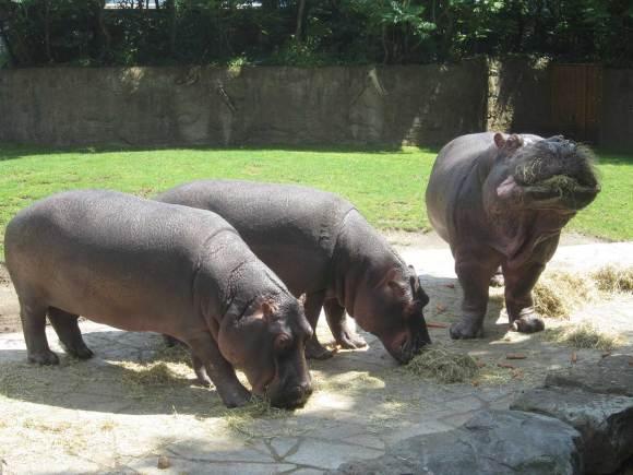cycle 4 task 08, Erica Baum, Hippos at Der Zoologische Garten