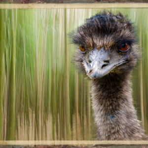 Emu in bamboo forest