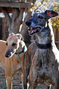 Romeo, right, with our sweet hound Cody, left.