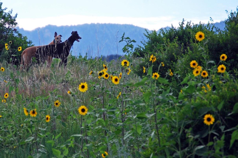 Bear Creek Dog Park