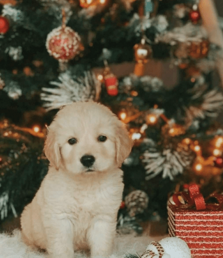 puppy in front of Christmas tree