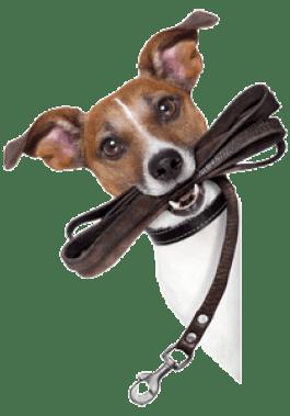 Colleen Pelar logo icon