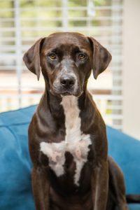 Theresa McKeon's dog, Penny