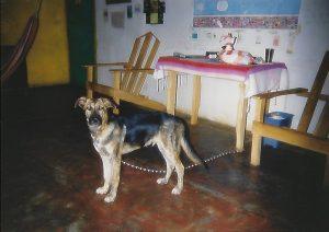 Sonia Patterson's dog, Sultan