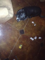 Cody destroyed her one Catnip toy