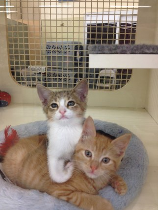 Two of Izzy's siblings are still for sale at PetCo... :-(