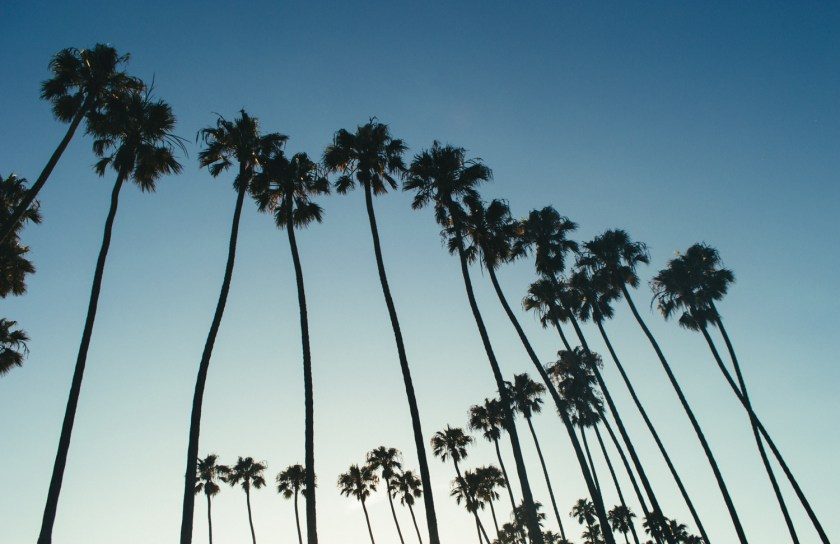Palm trees at Palisades Park in Santa Monica, California | ColleenWelsch.com