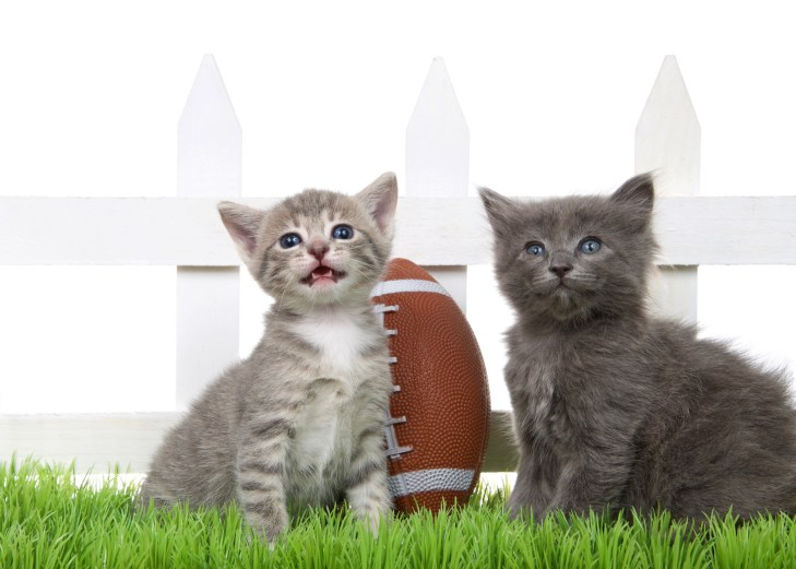 """""""two kittens with a football"""""""