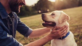 Some Great Ideas to Help Out Your Dogs Health