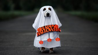 8 Fun & Spooky Pet Costumes for Halloween (2020)