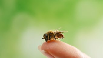 Teen Adopts Bee As A Pet After Rescuing It