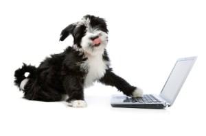 puppy doing common app