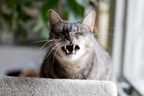 funniest-cats-sneeze-13