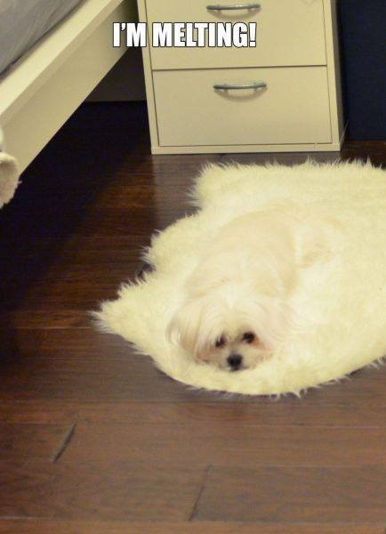 melting-dog