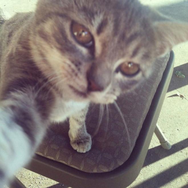 funny-cat-selfies-2
