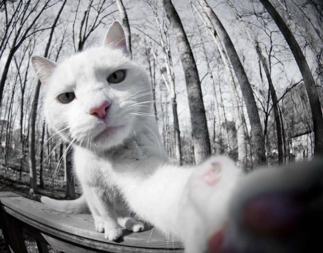 funny-cat-selfies-6
