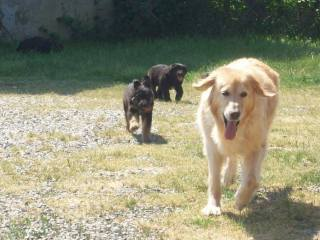 Le mamme: quanta pazienza! Non staccate i cuccioli da loro prima dei 60 giorni, lo dice anche la legge, oltre che l'etologia!