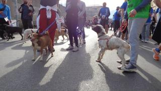 Cani in cerca di adozione: sono gratis, non di razza e bisognosi di casa prima di essere trasferiti in un canile da cui non usciranno più. Si trovano al canile di Massa.