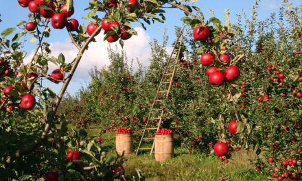 INNOVAZIONE DIGITALE IN AGRICOLTURA: LE AZIONI DELLA TOSCANA ILLUSTRATE AL SEMINARIO OCSE DI ROMA