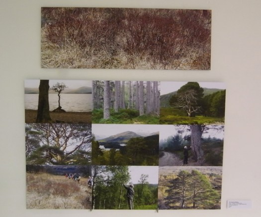 Caledonian images with future forest emerging.