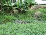 Croc Sanctuary 3