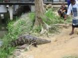 Croc Sanctuary 6