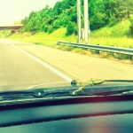 Day 6: Everyday.  It's not everyday a praying mantis hitches a ride on your windshield all the way from Raleigh into Cary.