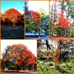 Day 2: Color. Fall colors in Raleigh this year.