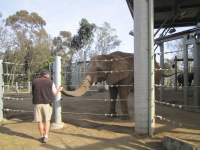 sandiegozoo-elephant-211413